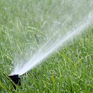 a sprinkler watering the lawn of a Lewis Smith Lake waterfront property